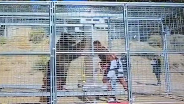 Ο Sapp μπήκε στο κλουβί με αρκούδα και το αποτέλεσμα ήταν τρομακτικό