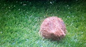 Σκωτία: Πέταξαν καρύδα μέσα στο γήπεδο!