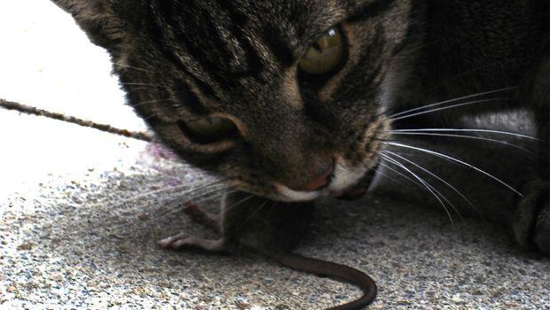 f92d042e5f15 Σαν τη γάτα με το ποντίκι... - Κ. Καίσαρης - SPORT 24