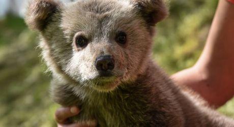 Λουίτζι, το αρκουδάκι που αγαπάει τον Μπουφόν!