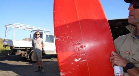 Ακυρώθηκαν αγώνες σέρφινγκ στην Αυστραλία λόγω επιθέσεων από καρχαρίες