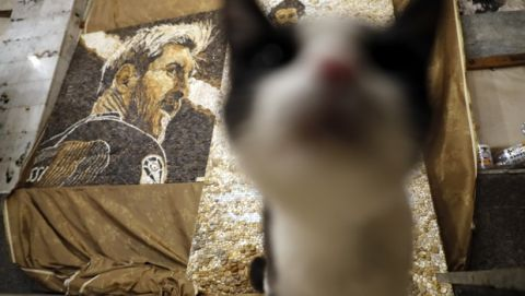 A cat called Masia, strolls near one of pebble mosaics depicting Argentina's Lionel Messi created by local artist Anna Solnechnaya and her apprentices ahead of the 2018 soccer World Cup at Solnechnaya's workshop in Kazan, Russia, Wednesday, June 13, 2018. Kazan is one of World Cup match venues in Russia. (AP Photo/Eugene Hoshiko)