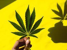 Ιστορική απόφαση ΟΗΕ: Η κάνναβη δεν ανήκει πλέον στα «επικίνδυνα ναρκωτικά»