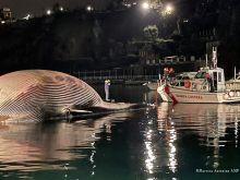Η μεγαλύτερη φάλαινα που έχει εντοπιστεί ποτέ στη Μεσόγειο βρέθηκε νεκρή στην Ιταλία