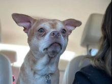 Αγγελία για υιοθεσία σκύλου γίνεται viral - Κανείς δεν τον θέλει (και υπάρχει σοβαρός λόγος)