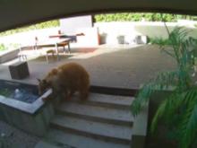 Αρκούδα μπήκε σε σπίτι και «βρήκε τον μπελά» της από δύο τεριέ (και δεν ήταν η πρώτη φορά)