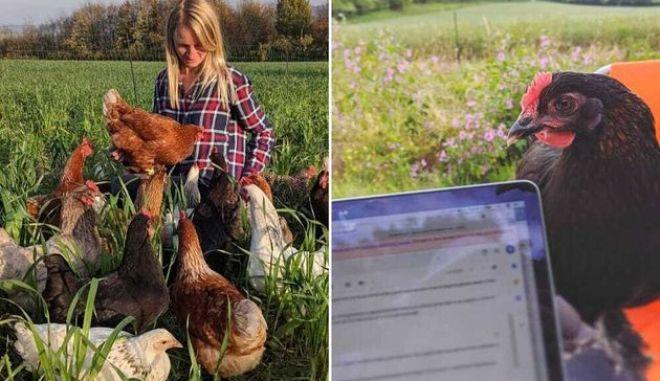 Η νέα μόδα της πανδημίας: Νοικιάζουν κότες - όχι μόνο για τα φρέσκα αυγά τους